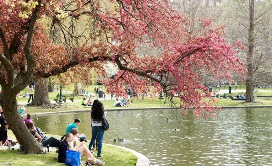 011614.public_garden.web