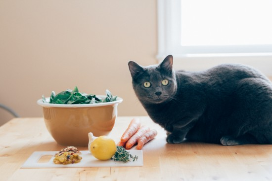 Blue Apron ingredients and Persie the cat